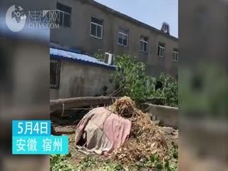 工人砍树致大树倒向幼儿园,1女童死亡