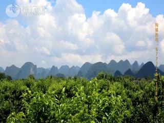 《桂林砂糖桔》宣传片